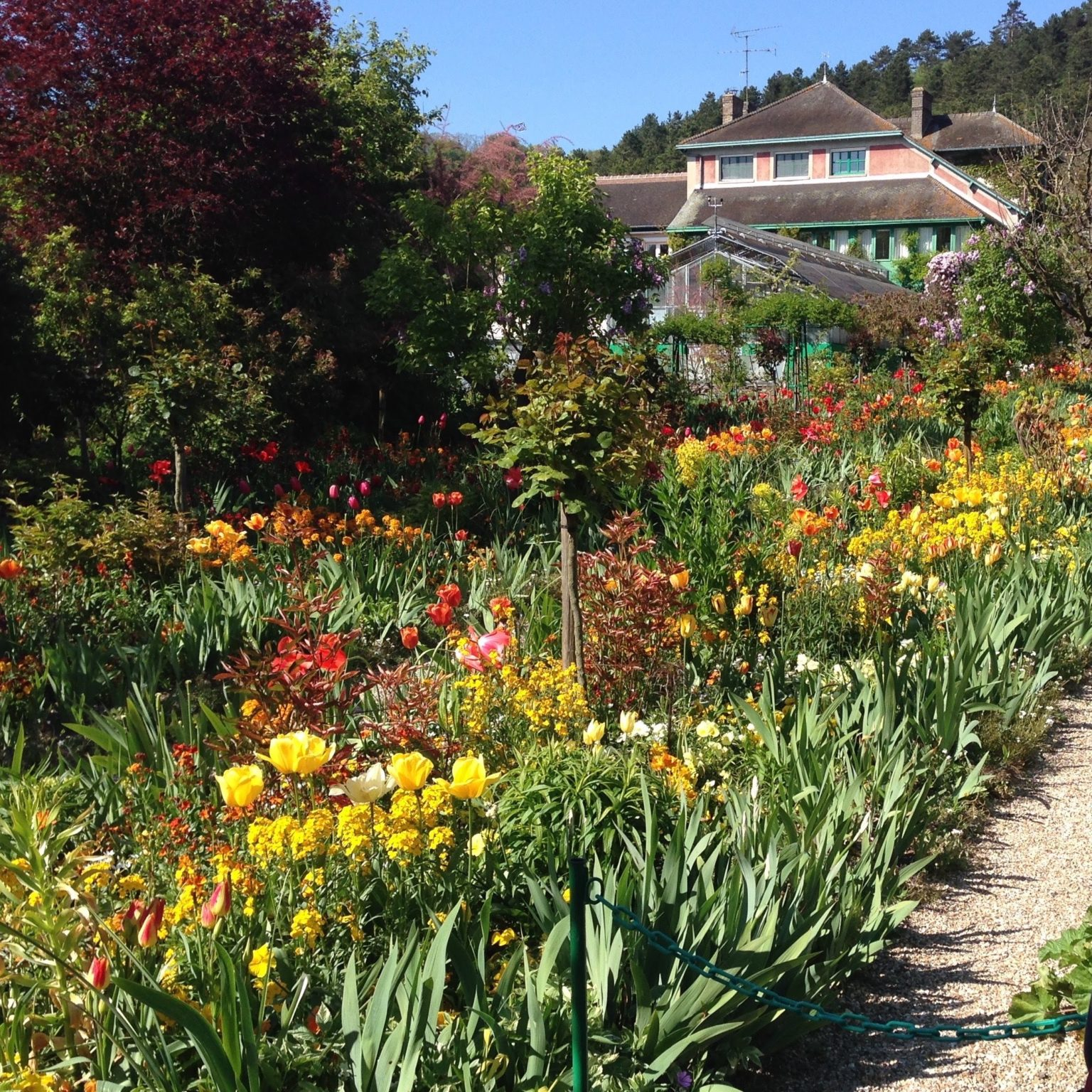 Rows and rows of flowers in bloom in the Giverny gardens